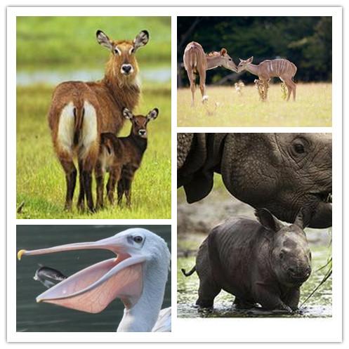 我们去长隆野生动物世界探奇